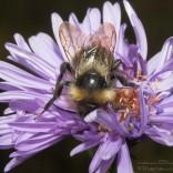 przyroda_owady (1)