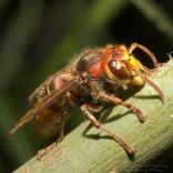 przyroda_owady (13)