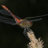przyroda_owady (14)