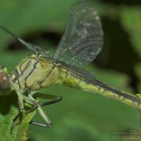 przyroda_owady (16)