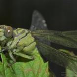 przyroda_owady (17)
