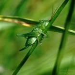 przyroda_owady (18)