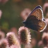 przyroda_owady (19)