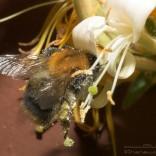 przyroda_owady (2)