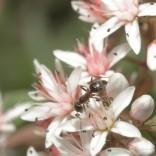 przyroda_owady (20)