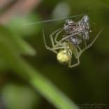 przyroda_owady (21)