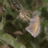 przyroda_owady (22)