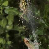 przyroda_owady (23)
