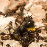 przyroda_owady (5)