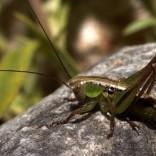przyroda_owady (6)