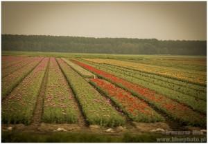 Holandia_majowka_2014___IMG_4894